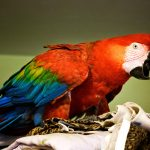 Macaw at Safe Haven